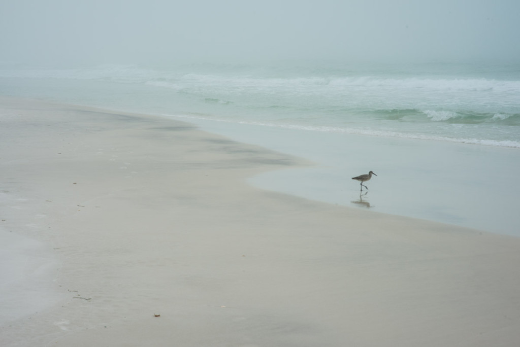 Walk by photographer Aranka Israni captures a lone sandpiper bird walking on the beach along the waters edge. Alys Beach, Florida. Full color, limited edition print.